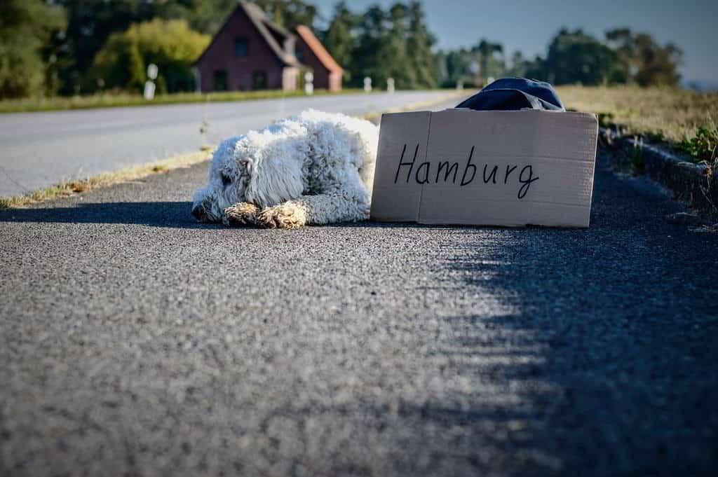 freie-trauung-hamburg-berichte